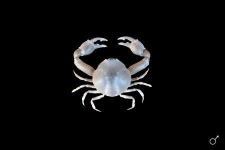 R Crabs Data Crab Database · C...